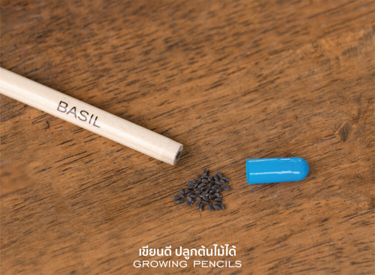 Essential Plantable Pencils With Seeds Growing Basil